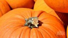 Ето кои са най-обичаните родни есенни храни