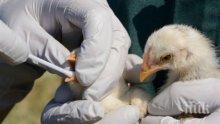 БАБХ тръгва по птицефермите заради риск от инфлуенца