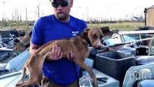 ЧУДО: Куче оцеля месец под срутена сграда след урагана Дориан
