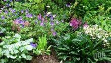 """Според учени: Растенията """"разговарят"""" помежду си"""