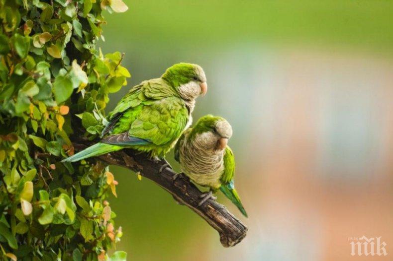 Мадрид обяви война на папагалите монах