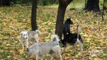 На първо място сме в Европа по операции от кучешка тения