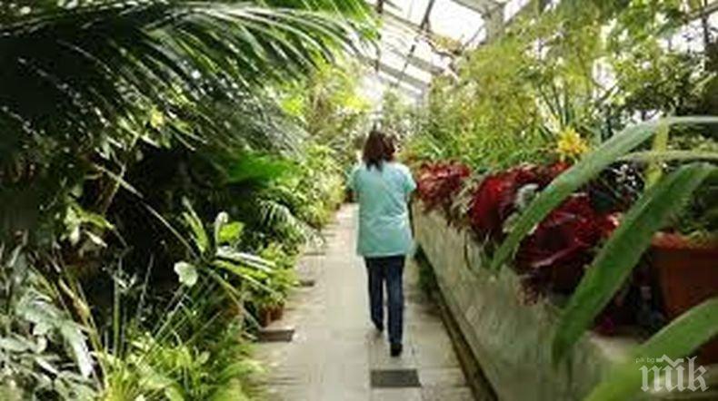 Съкровища: Ботаническата градина на БАН пази растения, свидетели на две войни