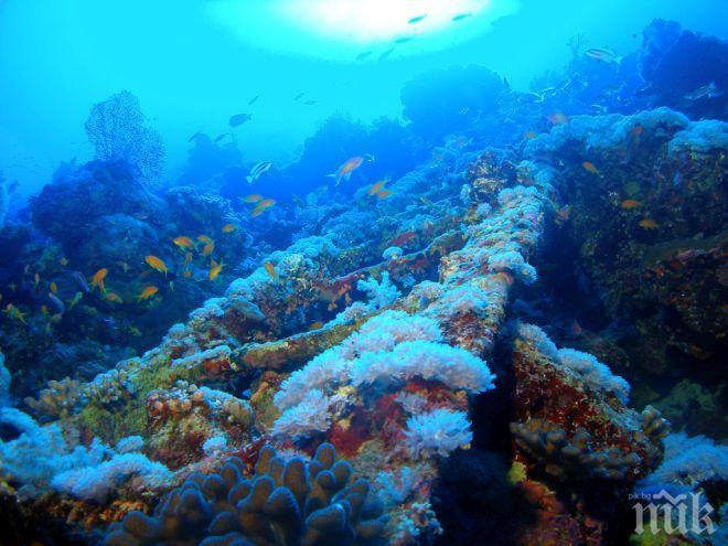 ЧУДО: В Средиземно море израстната корали, смятани за отдавна изчезнали