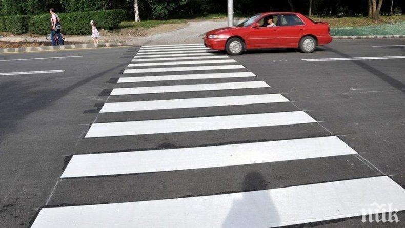 Пометоха на зебра възрастна жена в Добрич