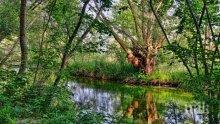 Почистват коритата на реките в Разлог