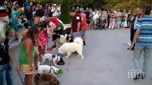 Най-лакомото куче гризна тарелка с кренвирши за части от секундата