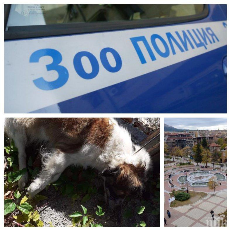 ПОРЕДНО ЗВЕРСТВО В ДУПНИЦА: Зоополицията е в зимен сън - изрод обеси куче на ограда, малко момче в шок от гледката (СНИМКИ 18+)