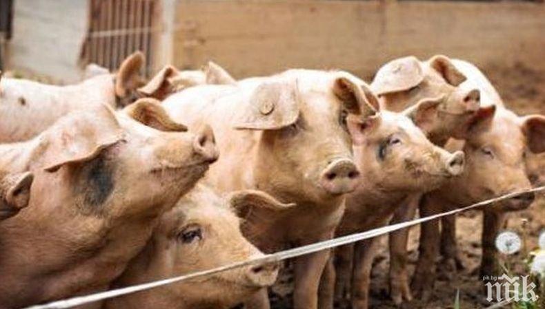 Изплатиха над 9 млн. лева за дезинфекция на личните стопанства срещу свинската чума
