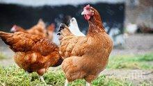 БАБХ: Над 85% от птицевъдните обекти у нас изпълняват изискванията за биосигурност и контрол за салмонела и инфлуенца