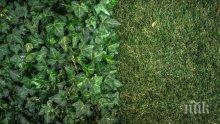 УЧЕНИ С ВАЖЕН ПРОБИВ: Изкуствена растителност превръща въглеродния диоксид в гориво