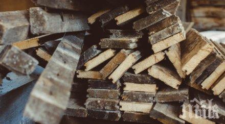 ПРОТЕСТ: 4000 в Румъния въстанаха срещу дървената мафия