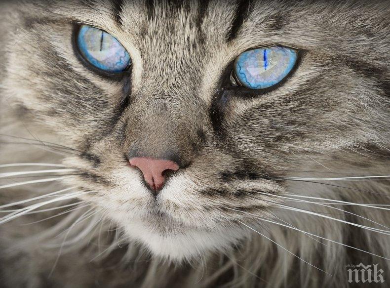 УНИКАЛНО ВИДЕО: Котка спаси бебе от падане по стълби (ВИДЕО)