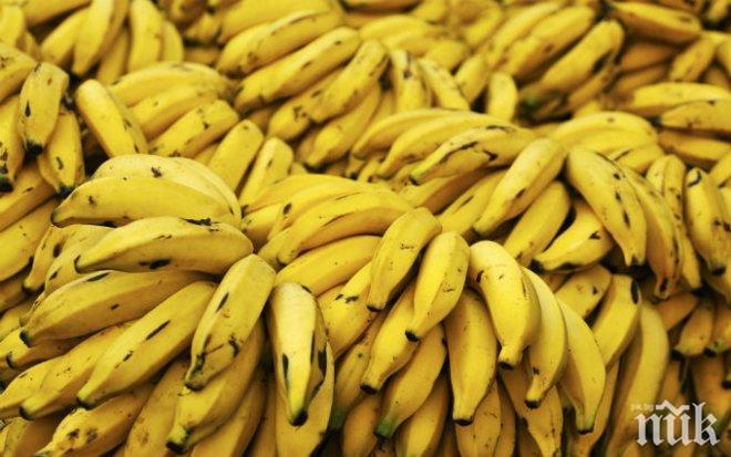 Ужас: Опасна гъба дебне от бананите