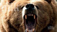 Будна мечка нападна и разби 7 кошера в Родопите