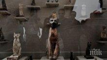 МИСТЕРИЯ: Мумия на необичайно голямо животно откриха в Египет
