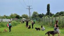 Осиновиха 43 кучета от приюта в Горни Богров в Германия