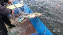Заловиха бракониери с лодки и мрежи на язовир край Полски Тръмбеш