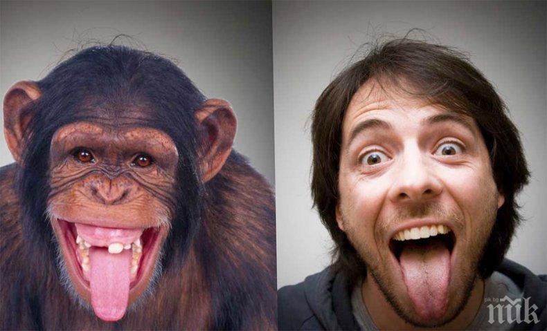 КЪДЕ СИ, ДАРВИН: Учени кръстосаха човек и маймуна! Ето какво се получи