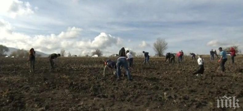 Инициатива: Доброволци започнаха засаждането на дръвчета край София