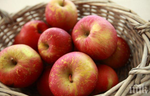 Свръх производството срина изкупната цена на ябълките