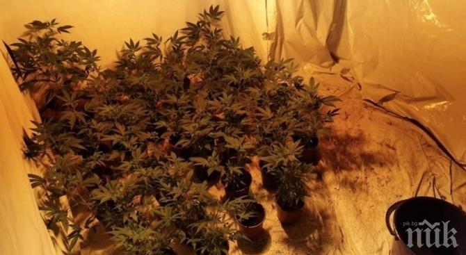 Разбиха домашна лаборатория за наркотици