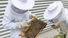 Пчеларите разчитат на директно финансиране от Брюксел