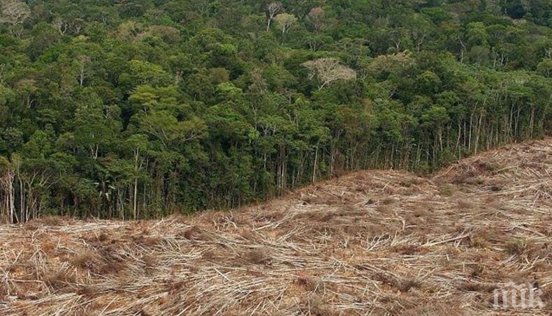 Обезлесяването в Амазония с рекордно ниво от години насам