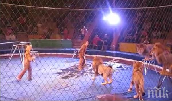 Париж забрани дивите животни в цирка