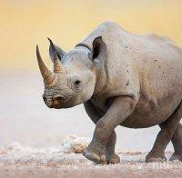Умря и последния суматрански носорог в Малайзия