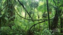 Една трета от тропическата флора в Африка е застрашена от изчезване