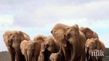 Русия дари на Габон пушки срещу убийци на слонове