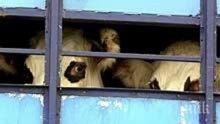 Полицията в Кърджали лови нелегални трафиканти на животни