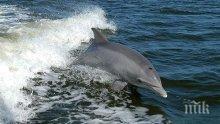 Делфини нападнаха и жестоко нахапаха малко момиченце