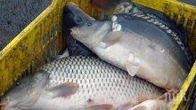 Засилени проверки на търговците на риба преди Никулден
