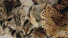 ПРОГРЕС: Забраняват продуктите от животински кожи в САЩ