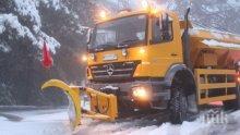 Патрулка нацели дърво заради непочистен път в Родопите (СНИМКА)