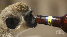 ДОКАЗАХА: Човечеството съществува заради алкохола