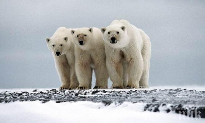 Учените установиха намаляване на мозъчните гънки при полярните изследователи