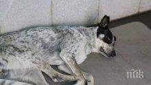 Изрод отрови куче в Крумовград