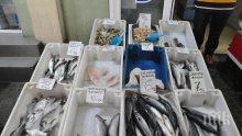 БАБХ насочи за унищожаване 217 кг риба без документи, установена при проверките за Никулден