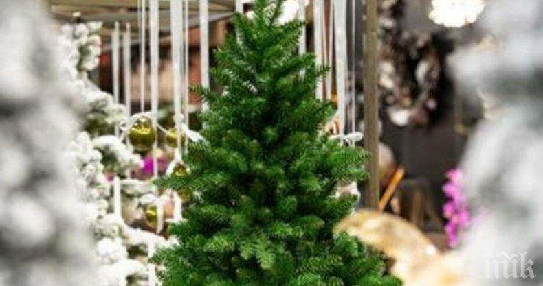 Българинът брои горе-долу стотачка за изкуствена елха