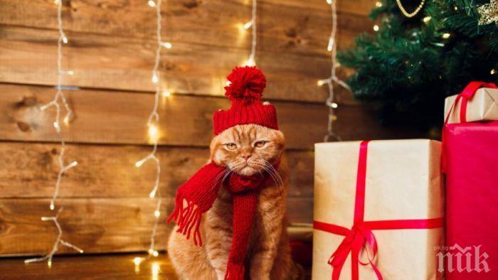 АКТУАЛЕН ВЪПРОС: Какво да подаря за Коледа?