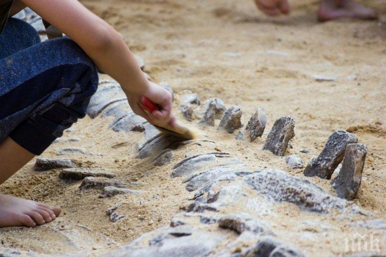Учени откриха нов вид динозавър