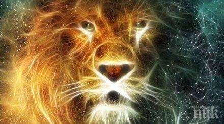 35 факта за Лъва, които доказват защо са топ зодия