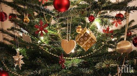 Българинът отделя до 110 лв. за изкуствена елха по Коледа
