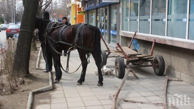 Стреснат от пиратки кон преобърна каруца в Благоевград, има пострадал