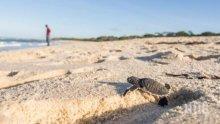 Няма пострадали животни след екокатастрофата на Галапагоските острови