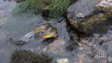 Глобиха НЕК с 10 бона за замърсяването на река Въча