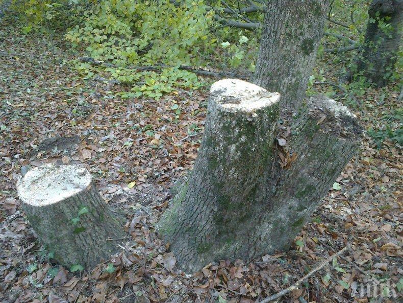 АКЦИЯ: Спипаха крадци на дърва